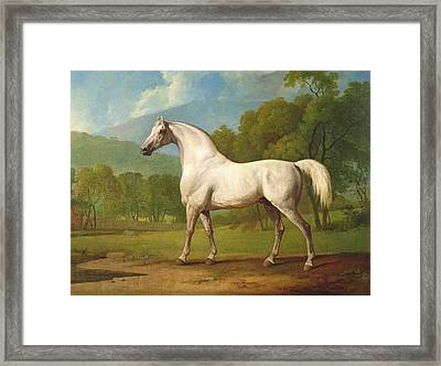 Mambrino Framed Print by George Stubbs