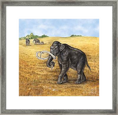 Mammoth Framed Print by Laurie OKeefe