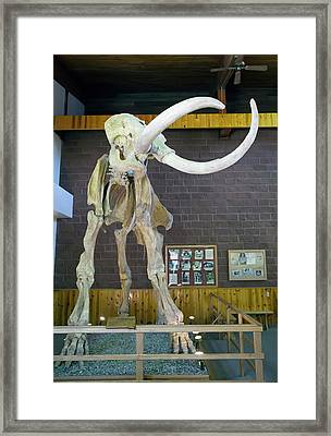 Mammoth Skeleton Framed Print by Jim West