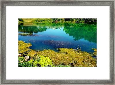 Mammoth Springs Water Vegetation Framed Print by Cindy Croal
