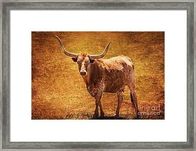 Mancos Colorado Longhorn Cattle Framed Print by Janice Rae Pariza