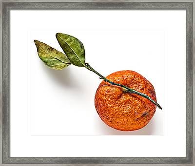 Mandarin Orange Framed Print by Robert Ullmann
