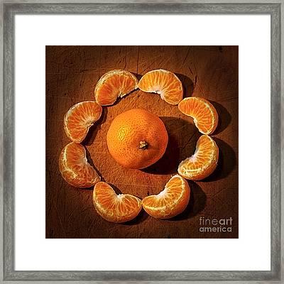 Mandarin - Vignette Framed Print by Kaye Menner
