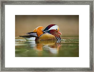 Mandarin Framed Print by Yuri Peress