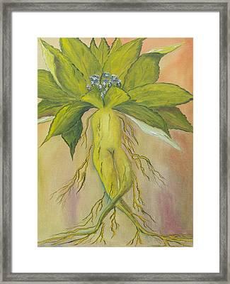 Mandrake Framed Print by Conor Murphy