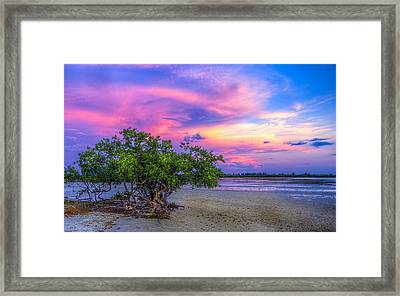 Mangrove By The Bay Framed Print by Marvin Spates