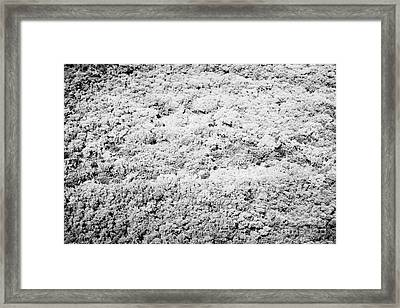 Mangrove Forest On An Island In The Florida Keys Usa Framed Print by Joe Fox