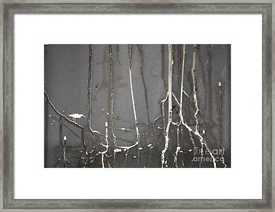 Mangrove Heron Framed Print by Adrian Hillman
