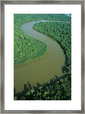 Mangrove Rhizophora Sp In Mahakam Delta Framed Print by Cyril Ruoso