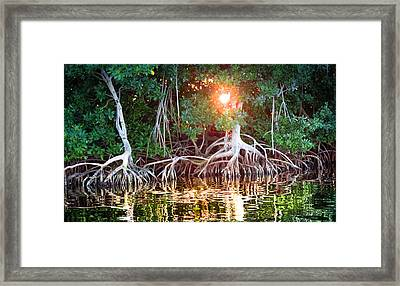 Mangrove Sunset Framed Print by Karen Wiles