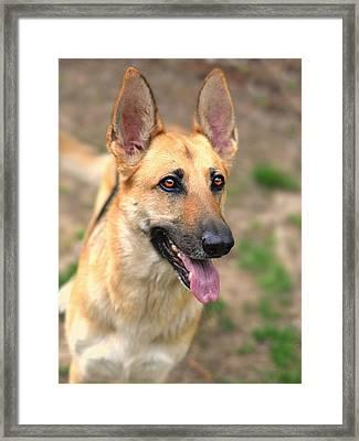 Mans Best Friend Framed Print by Trish Clark