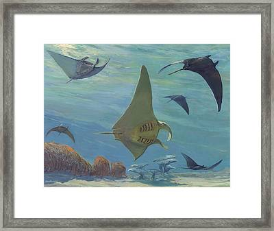 Manta Ray Framed Print by ACE Coinage painting by Michael Rothman