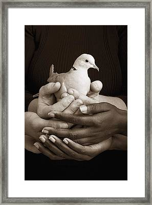 Many Hands Holding A Dove Framed Print by Ron Nickel