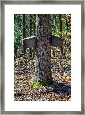 Maple Bucket Tap Framed Print by Brian Stevens
