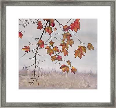 Maple In Gray Sky Framed Print by Carolyn Doe