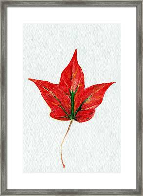 Maple Leaf Framed Print by Anastasiya Malakhova