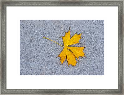 Maple Leaf On Granite 5 Framed Print by Alexander Senin