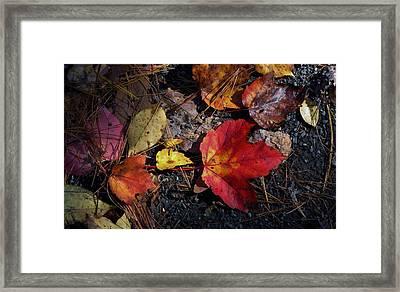 Maple Leaf In Shadow Framed Print by Michael Saunders