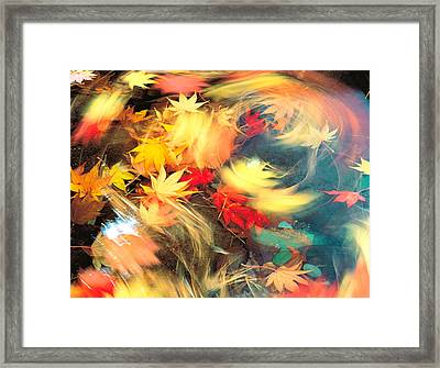 Maple Leaves, Blurred Motion Framed Print by Panoramic Images