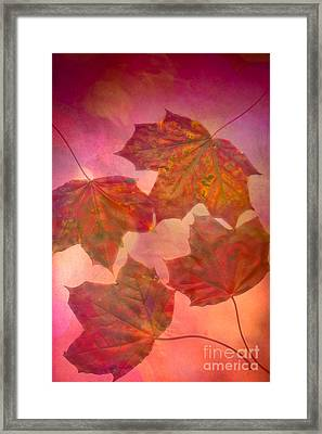 Maple Syrup Framed Print by Jan Bickerton