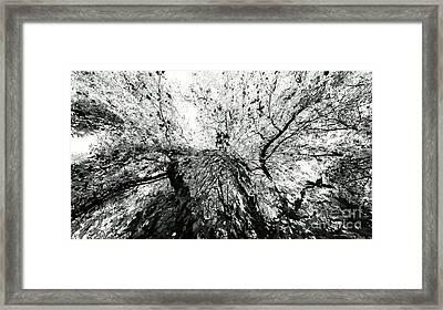 Maple Tree Inkblot Framed Print by CML Brown