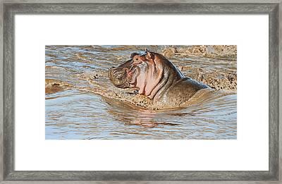 Mara River Hippo Framed Print by Aaron Blaise