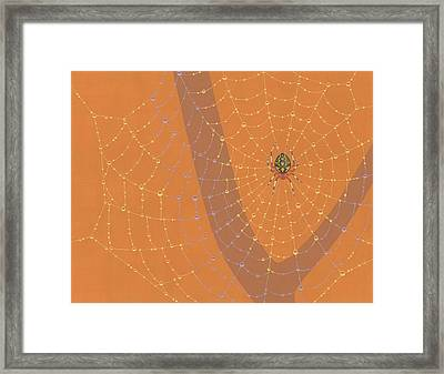 Marbled Orbweaver Spider Framed Print by Nathan Marcy