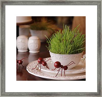 March Of The Ants Framed Print by Lyn  Steuart