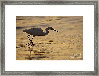 March Of The Egret Framed Print by Mike  Dawson