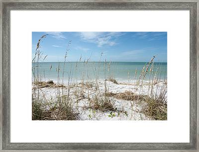 Marco Island Framed Print by Margaret Pitcher
