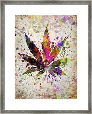 Marijuana Leaf In Color Framed Print by Aged Pixel