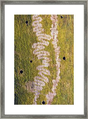 Marks Made By Snail Feeding On Algae Framed Print by Dr. John Brackenbury