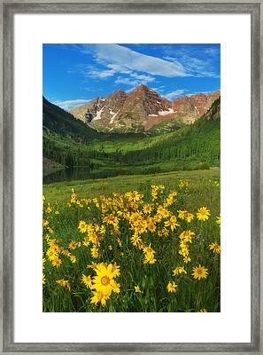 Maroon Summer Framed Print by Darren  White