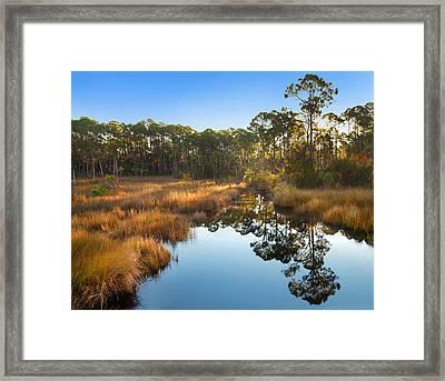 Marsh And Trees At Sunrise St Joseph Framed Print by Tim Fitzharris