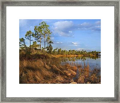 Marsh And Trees Saint George Isl Florida Framed Print by Tim Fitzharris