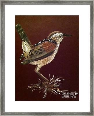 Marsh Wren Framed Print by Brenda Brown