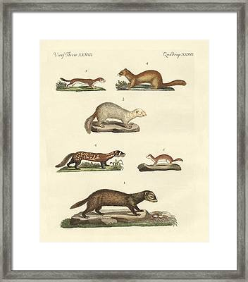 Martens And Weasel Framed Print by Splendid Art Prints