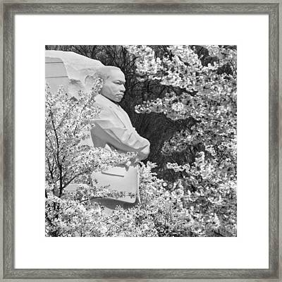 Martin Luther King Memorial Through The Blossoms Framed Print by Mike McGlothlen