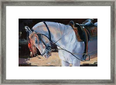 Marwari Horse Framed Print by Jennifer Wright