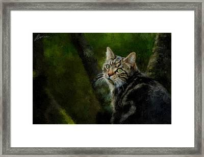 Master Of Disguise Framed Print by Marina Likholat