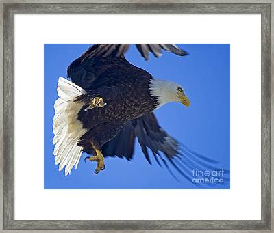 Master Of The Sky Framed Print by Nick  Boren