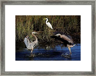 Mating Ritual Framed Print by Paulette Thomas