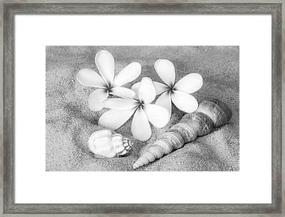 Maui Beach Treasures Bw Framed Print by Susan Candelario