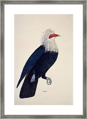 Mauritius Blue Pigeon Framed Print by Julian Pender Hume/natural History Museum, London