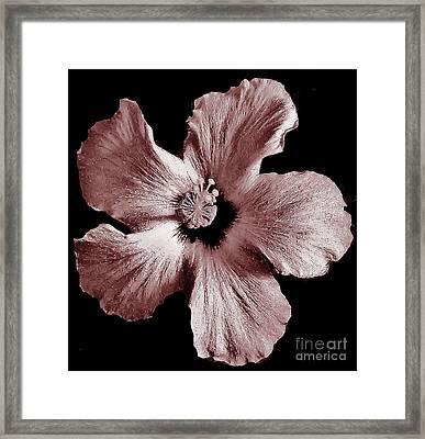 Mauve Hibiscus Framed Print by Marsha Heiken