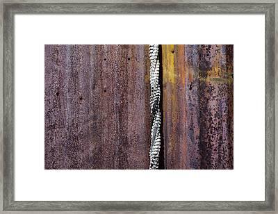 Maximum Decay  Framed Print by Fran Riley