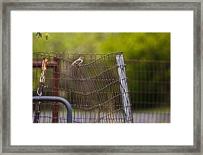 Maybe I Should Start That Diet Framed Print by Mark Alder