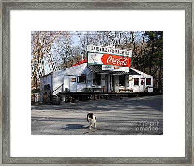 Mayor Of Rabbit Hash Framed Print by Mel Steinhauer