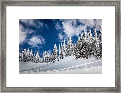 Mazama Trees Framed Print by Inge Johnsson