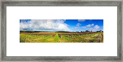 Mclaren Flat Vineyards  Framed Print by Bill  Robinson